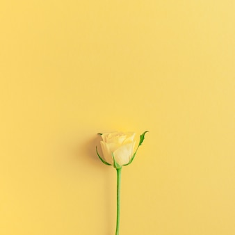 Frische gelbe rosenzusammensetzung