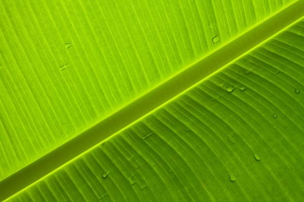Frische gesunde natur ökologie muster