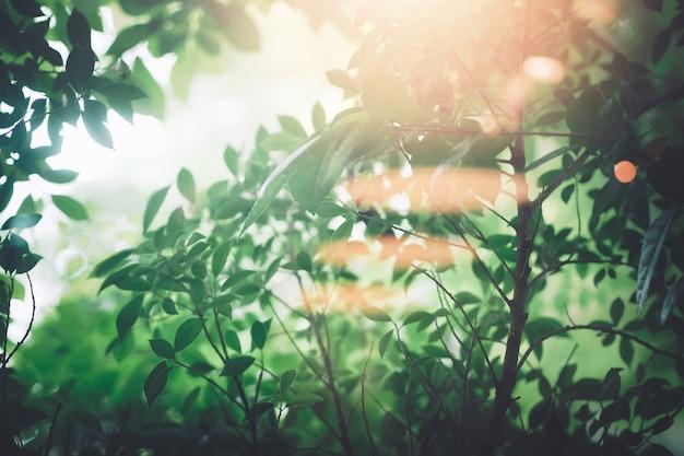 Frische grünblätter und -bäume der weichzeichnung mit sonnenstrahl