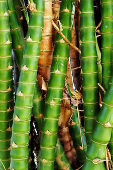 Frische grüne bambusnatur für hintergrund