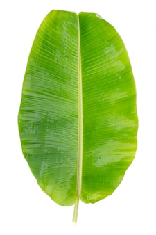 Frische grüne bananenblätter