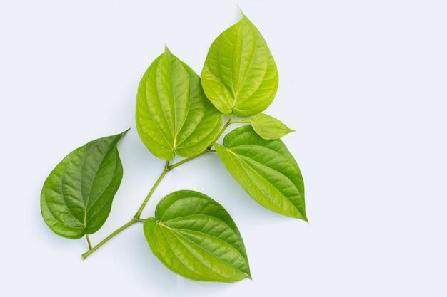 Frische grüne blätter der betelpflanze auf weißer oberfläche