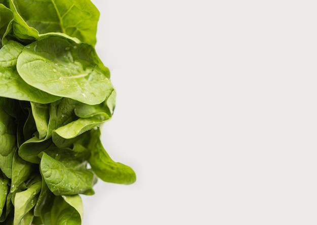 Frische grüne blätter des salatkopierraums