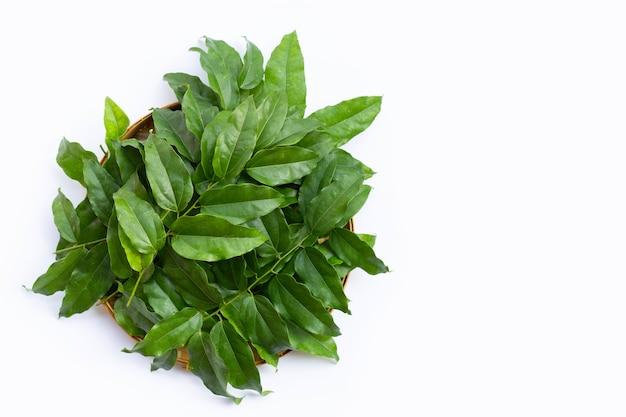 Frische grüne blätter von tiliacora triandra