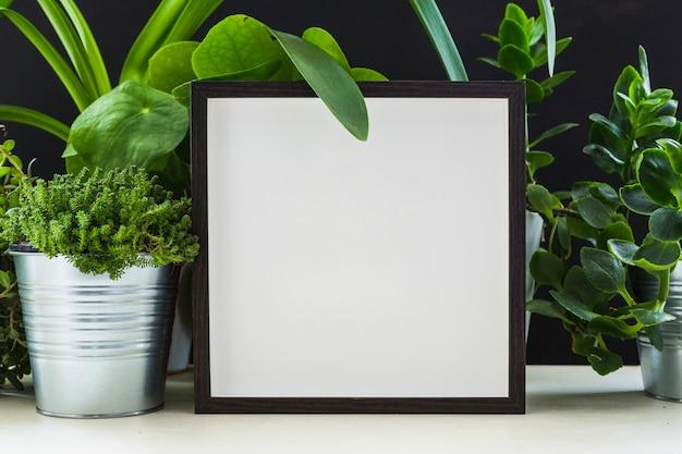 Frische grüne blumentöpfe nahe dem weißen fotorahmen auf schreibtisch
