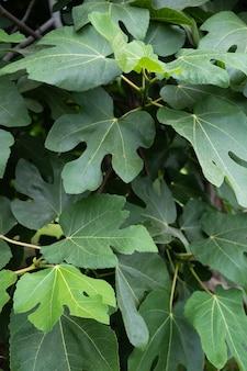 Frische grüne erdbeerbaumblätter. foto in hoher qualität