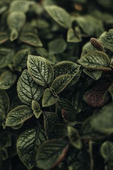 Frische grüne exotische pflanzen, die in der natur wachsen. natürlicher hintergrund. organische textur im detail. vertikal