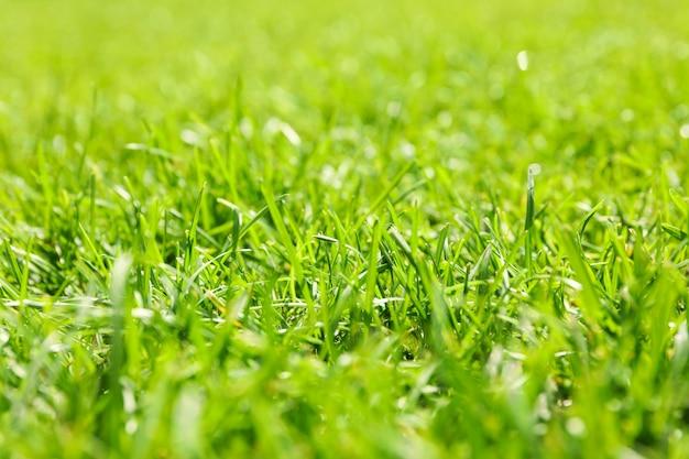 Frische grüne grasbeschaffenheit. natürlicher hintergrund, nahaufnahme