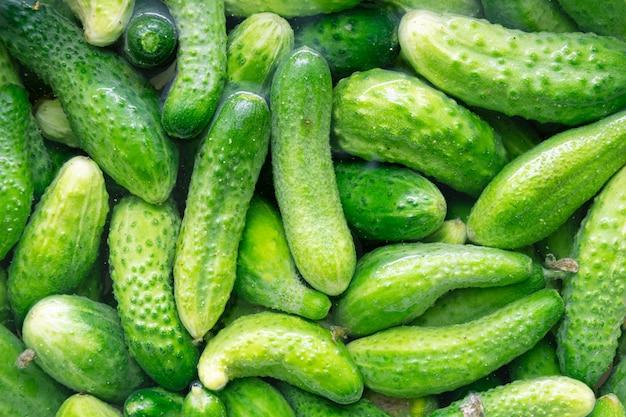 Frische grüne gurke im wasser. natürlicher hintergrund des biologischen lebensmittels