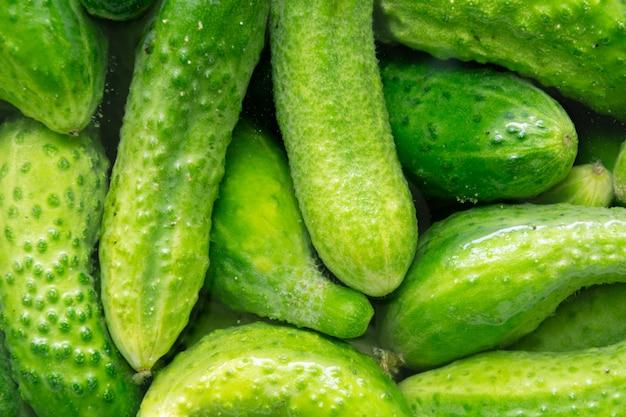 Frische grüne gurken im wasser