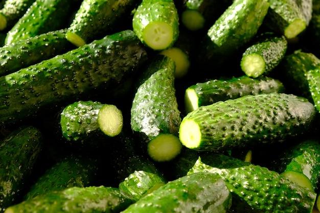 Frische grüne gurken in hartem licht, gurkenhintergrundnahaufnahme.