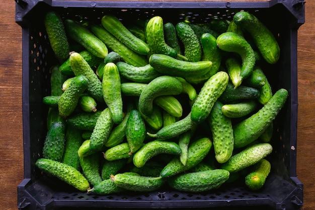 Frische grüne gurken in schwarzer plastikbox