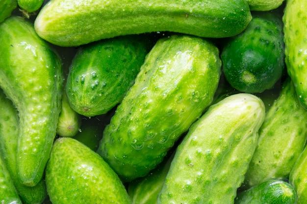 Frische grüne gurken