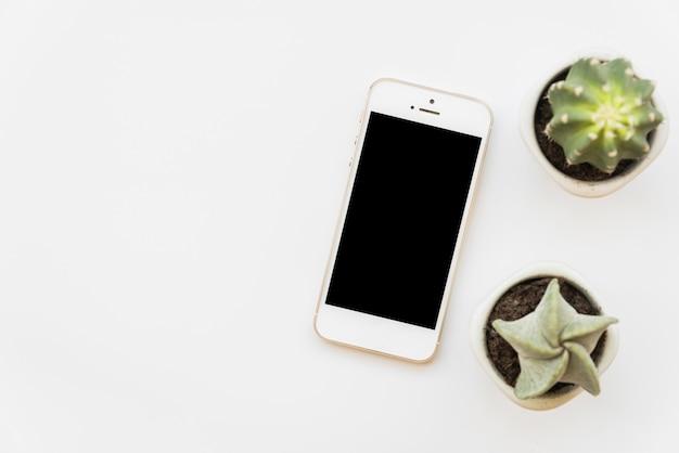 Frische grüne kakteen in der nähe von smartphone