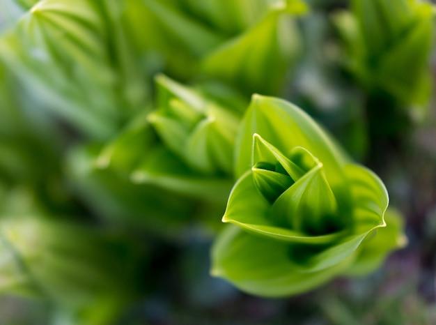 Frische grüne laub leafe pflanzennahaufnahme