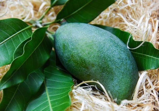 Frische grüne mango und grünblätter auf bambus, rohe sommerfrucht der erntemango