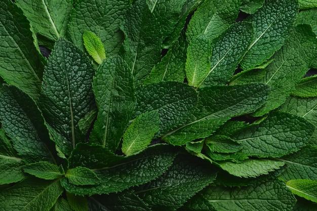 Frische grüne minze nahaufnahme auf einer dunkelgrünen oberfläche
