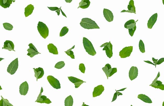 Frische grüne minzeblätter auf weißem hintergrund lokalisierten nahtloses muster