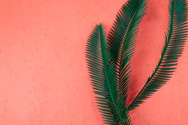 Frische grüne palmblätter auf korallenrotem strukturiertem hintergrund