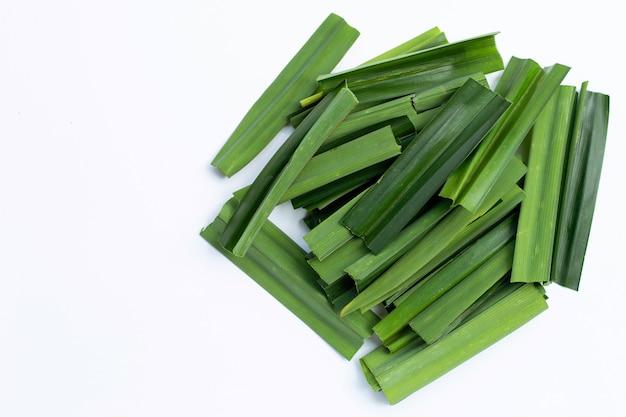 Frische grüne pandanblätter.