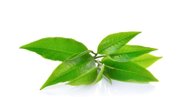 Frische grüne teeblätter isoliert
