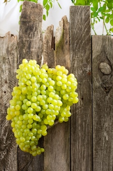 Frische grüne trauben auf altem holzzaun