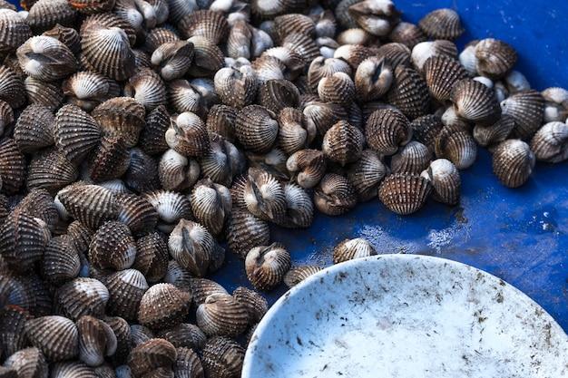 Frische herzmuscheln (blood cockles) köstliche meeresfrüchte in thailand