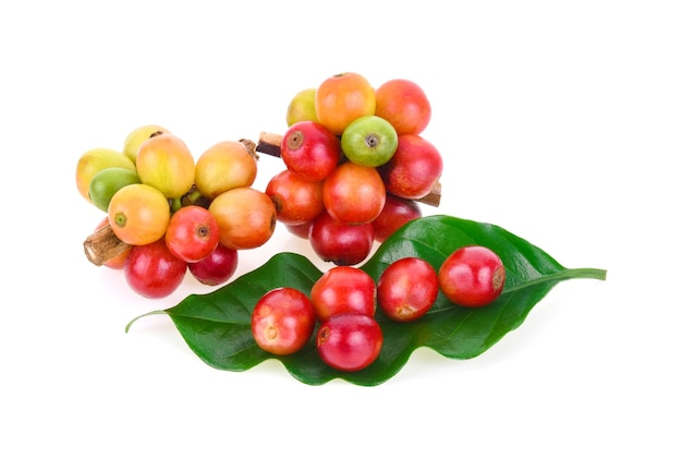 Frische kaffeebohnen isoliert auf weißem hintergrund