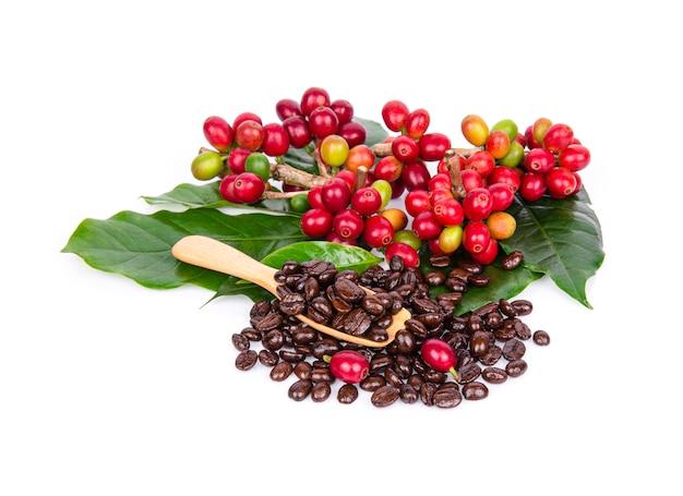 Frische kaffeebohnen lokalisiert auf weißer wand