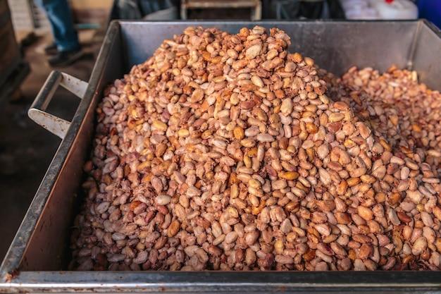 Frische kakaobohnen zur gärung