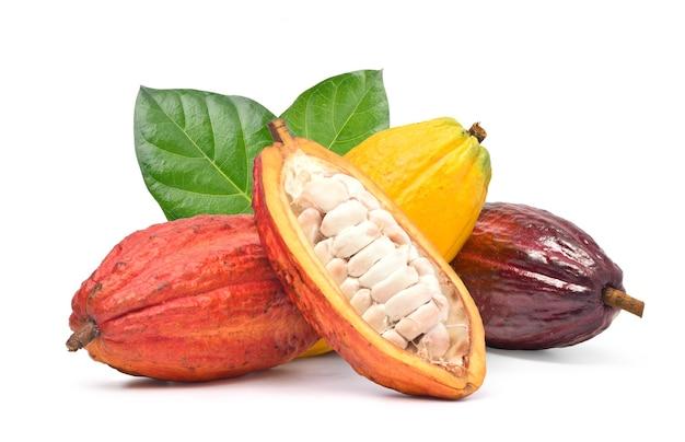 Frische kakaofrüchte lokalisiert auf weiß