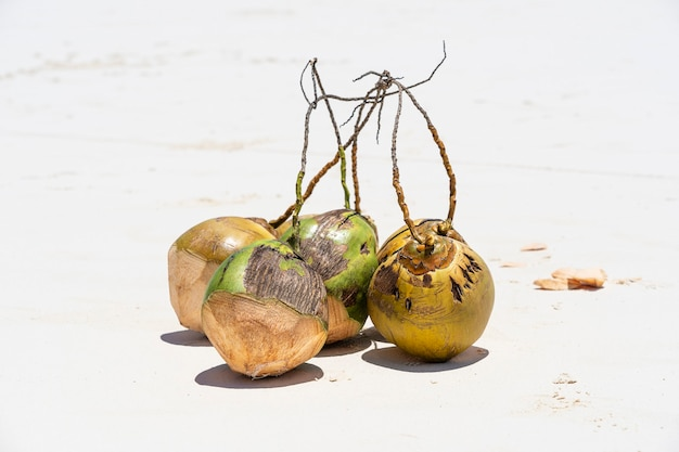 Frische kokosnüsse am sandstrand, sansibar, tansania, nahaufnahme