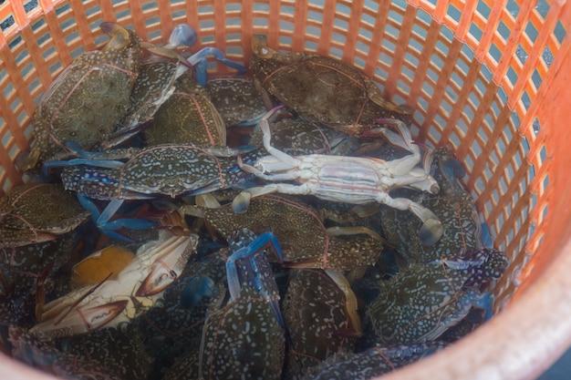 Frische krabbe auf rotem korb
