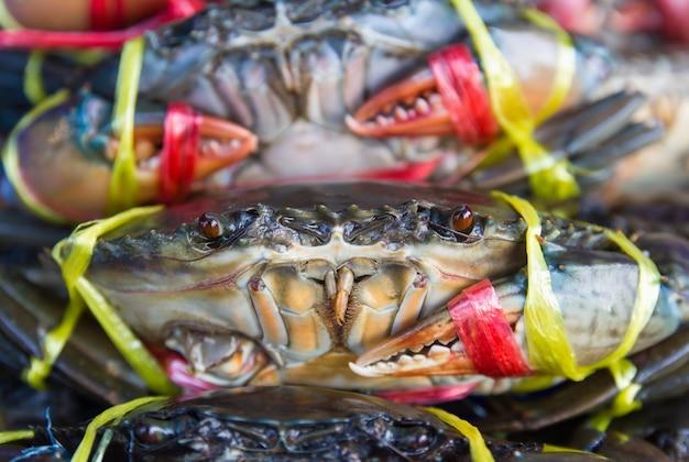 Frische krabben im angebot