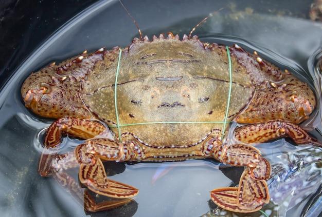 Frische krabben