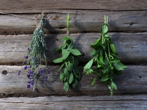 Frische kräuter minze, lavendel, basilikum in bündeln hängen an einem trockenseil auf einem rustikalen holzhintergrund aus baumstämmen. trocknen und ernten von kräutern.