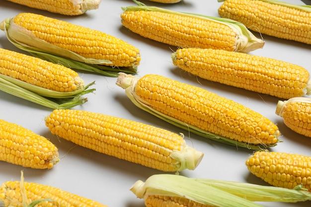 Frische maiskolben auf licht