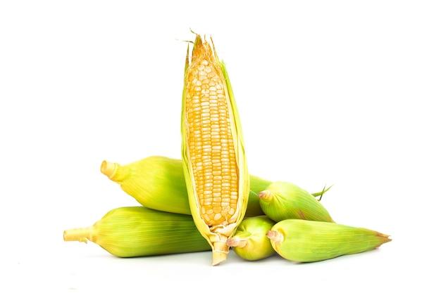 Frische maiskolben oder kornähren lokalisiert auf weißem hintergrund