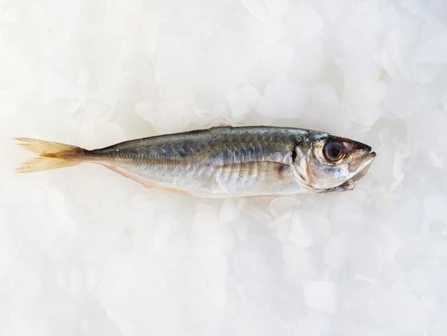 Frische makrele der nahaufnahme auf eiswürfeln