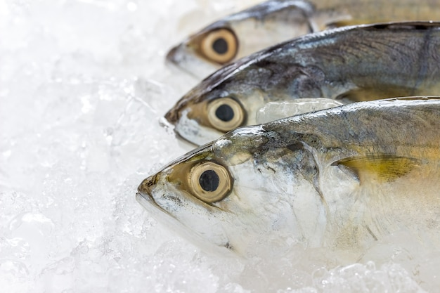 Frische makrele, in eis getränkt, um sie frisch zu halten.