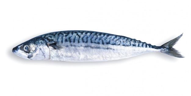 Frische makrele in weiß
