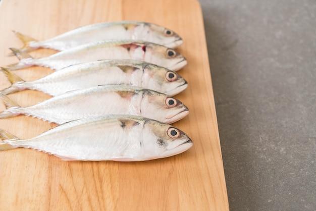 Frische makrele