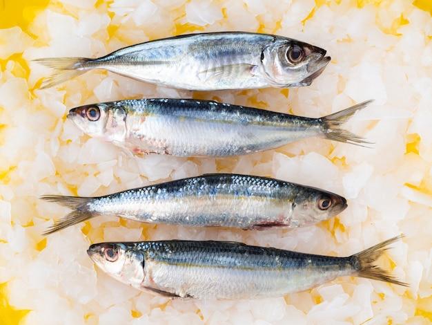 Frische makrelen der draufsicht auf eiswürfeln