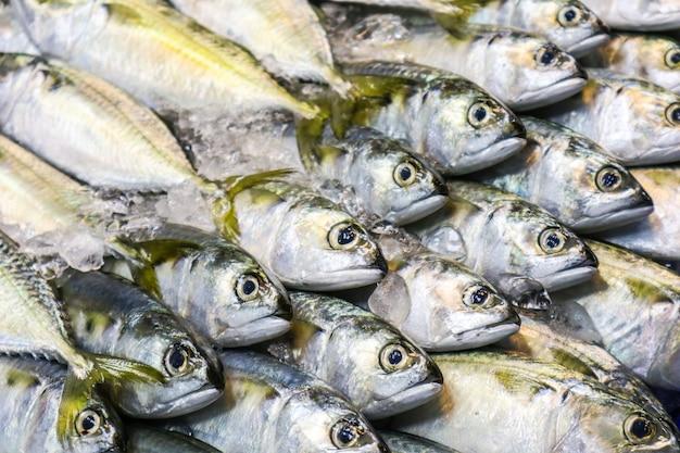 Frische makrelen werden hintereinander auf die kühlplatte gestellt