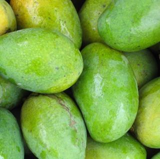 Frische mangos, früchte