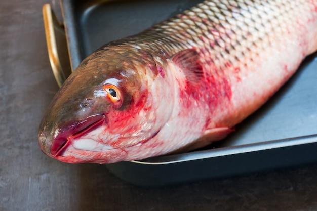 Frische meeräsche des rohen hauptfisches auf schwarzem