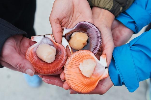 Frische meeresmuscheln oder muscheln werden aus dem meer gefangen und auf dem markt verkauft, um für köstliches essen in einem persönlichen zuhause oder restaurant gekocht zu werden.
