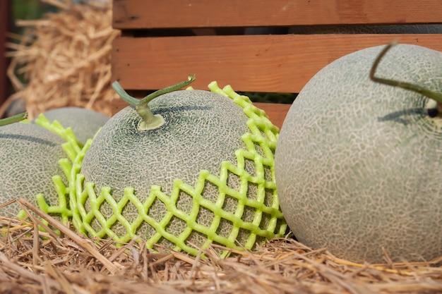 Frische melonen auf stroh. nahansicht. bio-obst