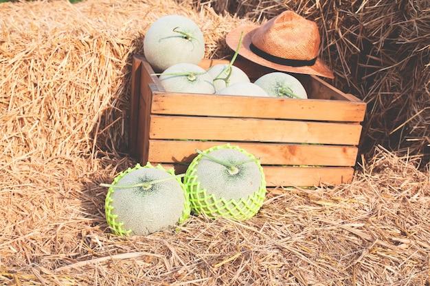 Frische melonen im bio-bauernhof. gesundes konzept landwirtschaft
