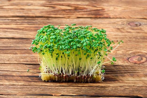 Frische microgreens. sprossen der senfpflanze auf hölzernem hintergrund.